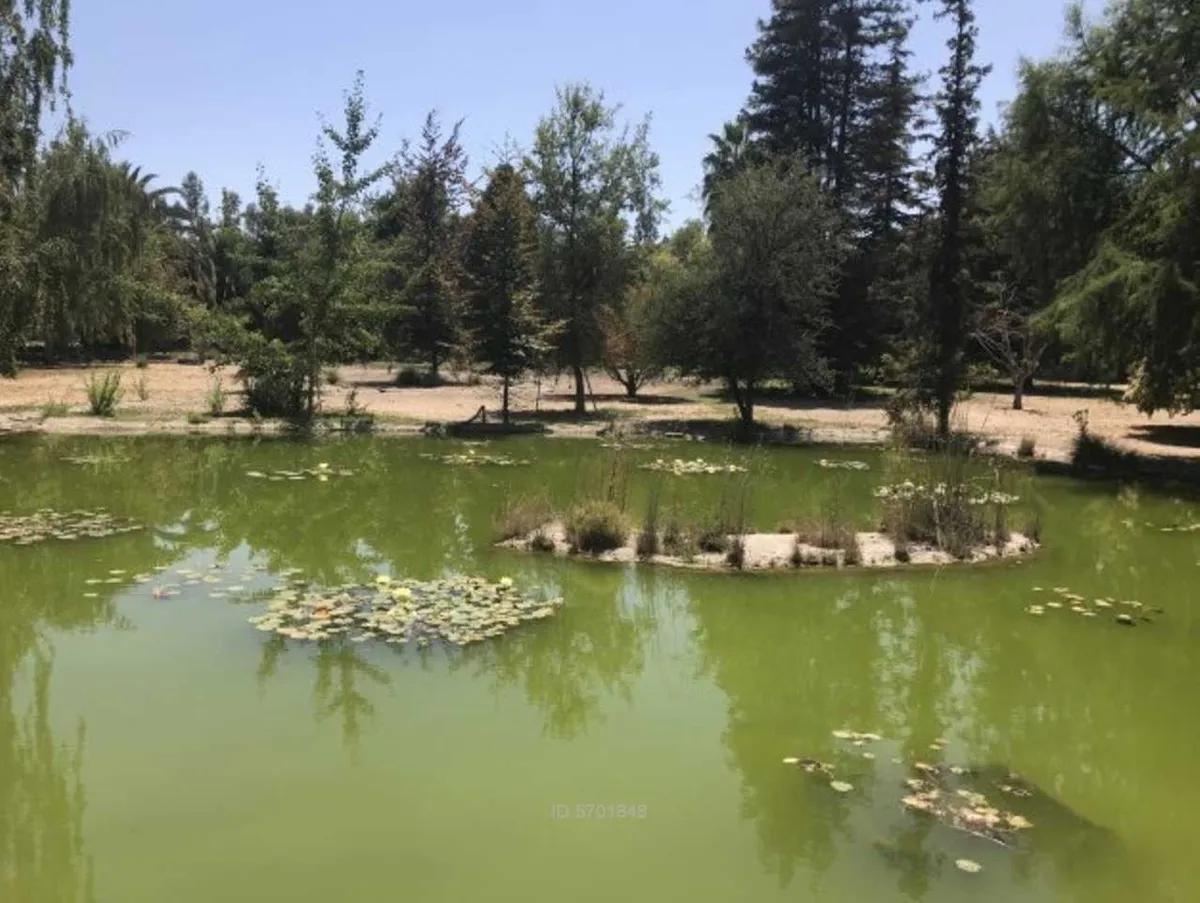 Parque Con Árboles Ornamentales Y Laguna