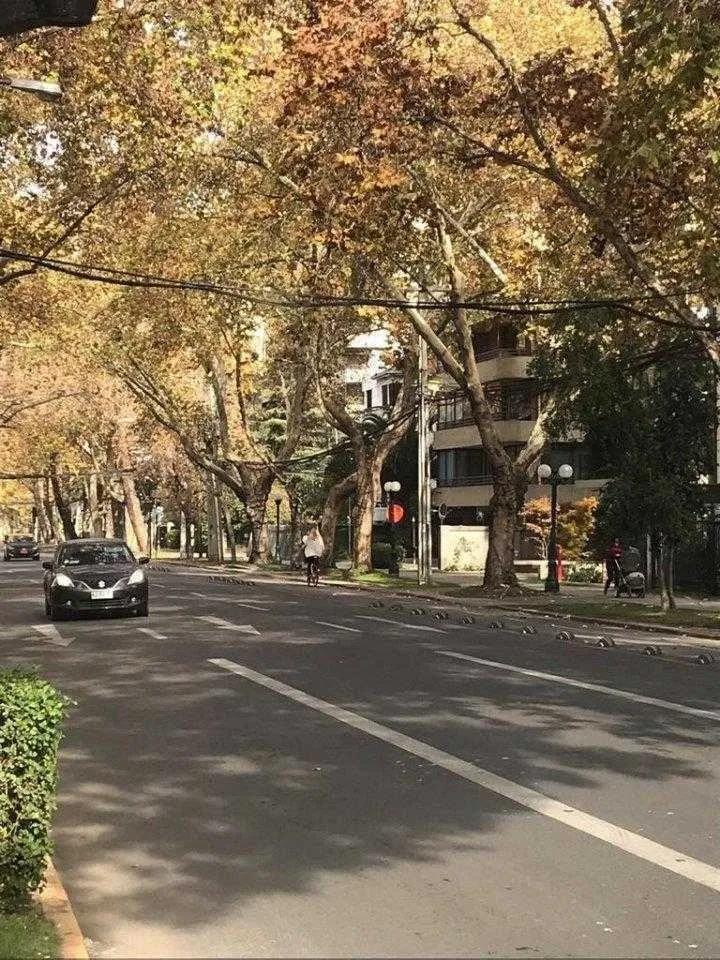 Providencia - Ricardo Lyon Con Pocuro